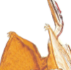 pterosaur: (And I not you shall be the one afraid)