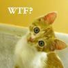 sullacat: (kitty wtf)