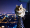 brueggen: (кот)