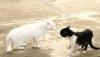 brueggen: (кошки)