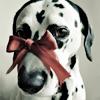 bronenosez_nefertiti: (cadeau)