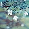 v2v: (весна)