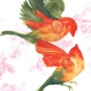 ambustio: (fire bird)