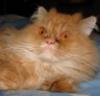 shepsy: (Тесса. Кошка которая.)
