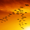 leesa_perrie: icon of birds flying in orange sky (Birds Flying)