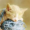 hellkitty: (cat kitten on yarn)