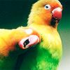 justlook3: (Stock: Birds)