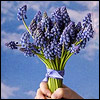 acsioma: (синие цветы)