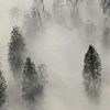 hellkitty: (fog in trees)