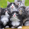 curledupkitten: (kittens!!!111)