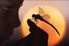 ettegoom: (Dragonfly)