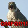 ouri: (oh my falcon GOD)