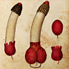 quillori: a remarkably phallic illustration of a mushroom (theme: fanfic (subtext mushroom))