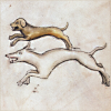 quillori: two hounds in full pursuit (comment: a cry of hounds)