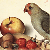 quillori: illustration of a parrot perched on a dish of fruit (cooking: dish of fruit)