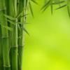 bambuk: (Default)