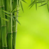 bambuk: (pustota)