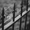jouez_moi: (|008| bw iron pickets w. cobwebs)
