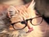 bibinka_11: (очки)