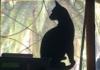 kleowa: (cat)