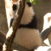 purplepanda: (panda)