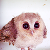 brokenchrysalis: color (|owl| vite)