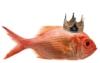 tcutca: (рыба моЯ)