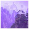 porphyra: (trees on mountains)