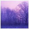 porphyra: (trees)