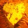 galapago: (Сердце)