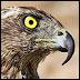 earlyhawk: (- Кому две плюхи? - встрепенулся Гуталин)