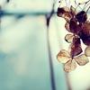 miauka_marta: (воздух)