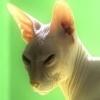 nadya_german: (лысая кошка)