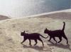 keytee: (wild cats)