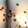 vernamorta: (Солнце)