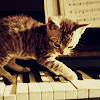 vanillamagick: (Piano Kitty)