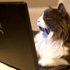 alexseanchai: cat using laptop (writing cat at laptop)