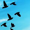 atlanticslide: (Birds)
