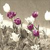 mariliisa: (tulips)