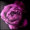 mariliisa: (rose)