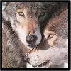 chelletoo: (Wolf)
