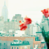 raven: red tulips in a vase on a balcony, against a background of a city (stock - tulips)