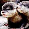 spnanonhaven: (baby otters)
