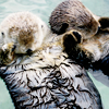 spnanonhaven: (otter non-con handholding)