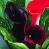 ariestess: (black star calla lily -- from meathiel)