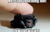 wisconsinwriter: I love this bat. It  could be me. (bat)