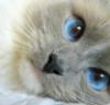 porosolka_balt: (кошка)