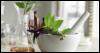 belladonna1185: (Belladonna plant)