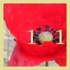 stapsdoes101things: '101' superimposed on a red poppy (101flowers, 101plants, 101garden)