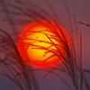 lyse_lette: (sun)